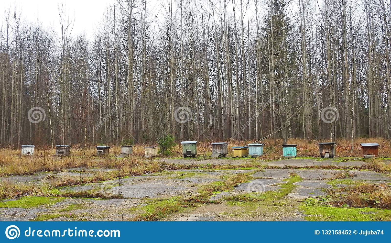 Bee hives near forest, Lithuania