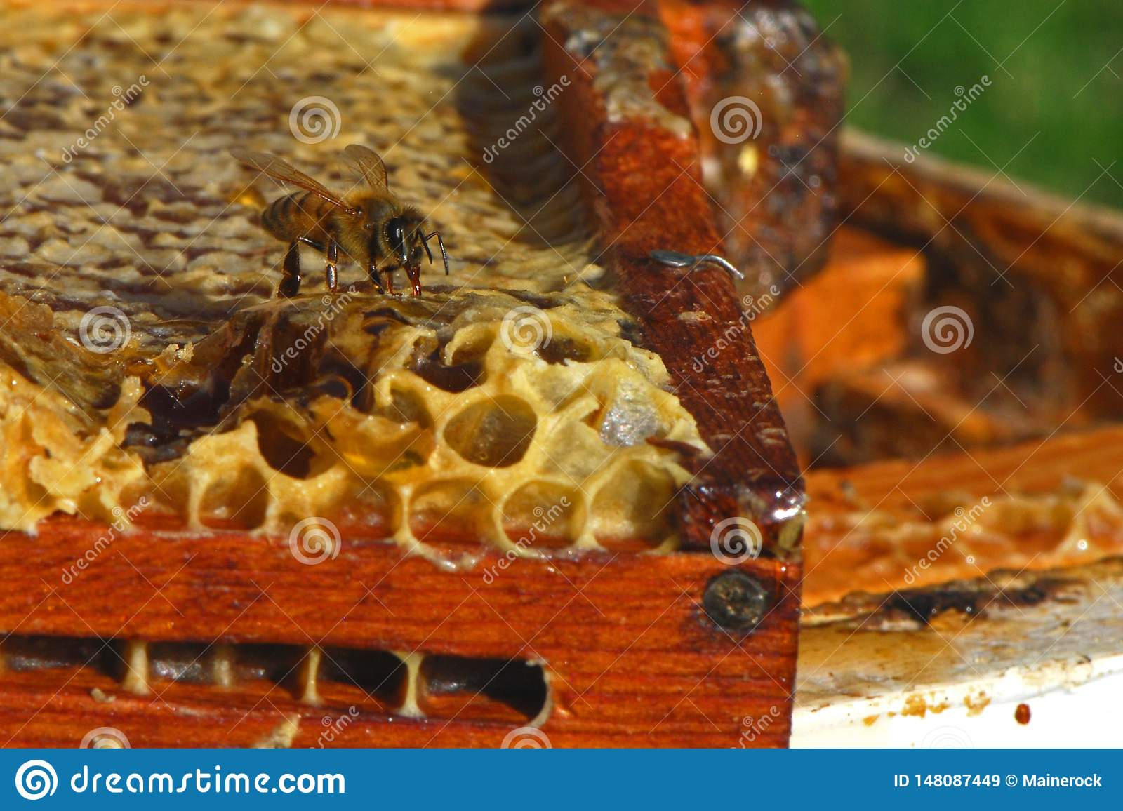 A bee on honeycomb