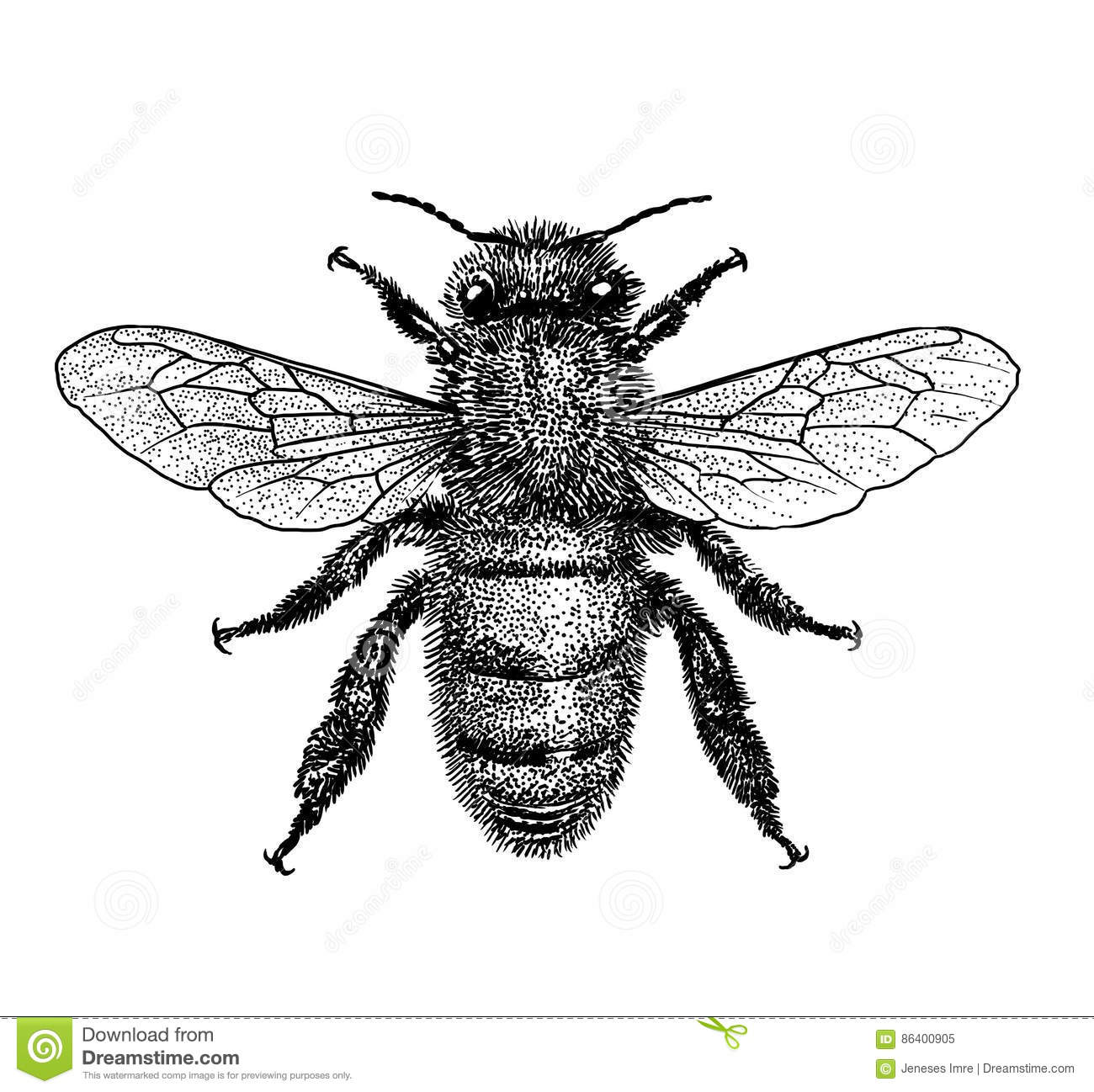 Bee Illustration, Engraving, Drawing, Ink Stock Vector