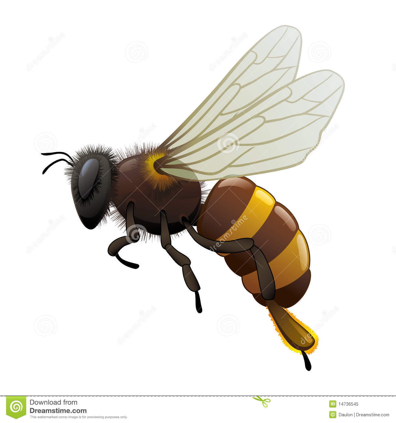 Vector honey Bee.Full compatible. Created with gradients. Named in ...