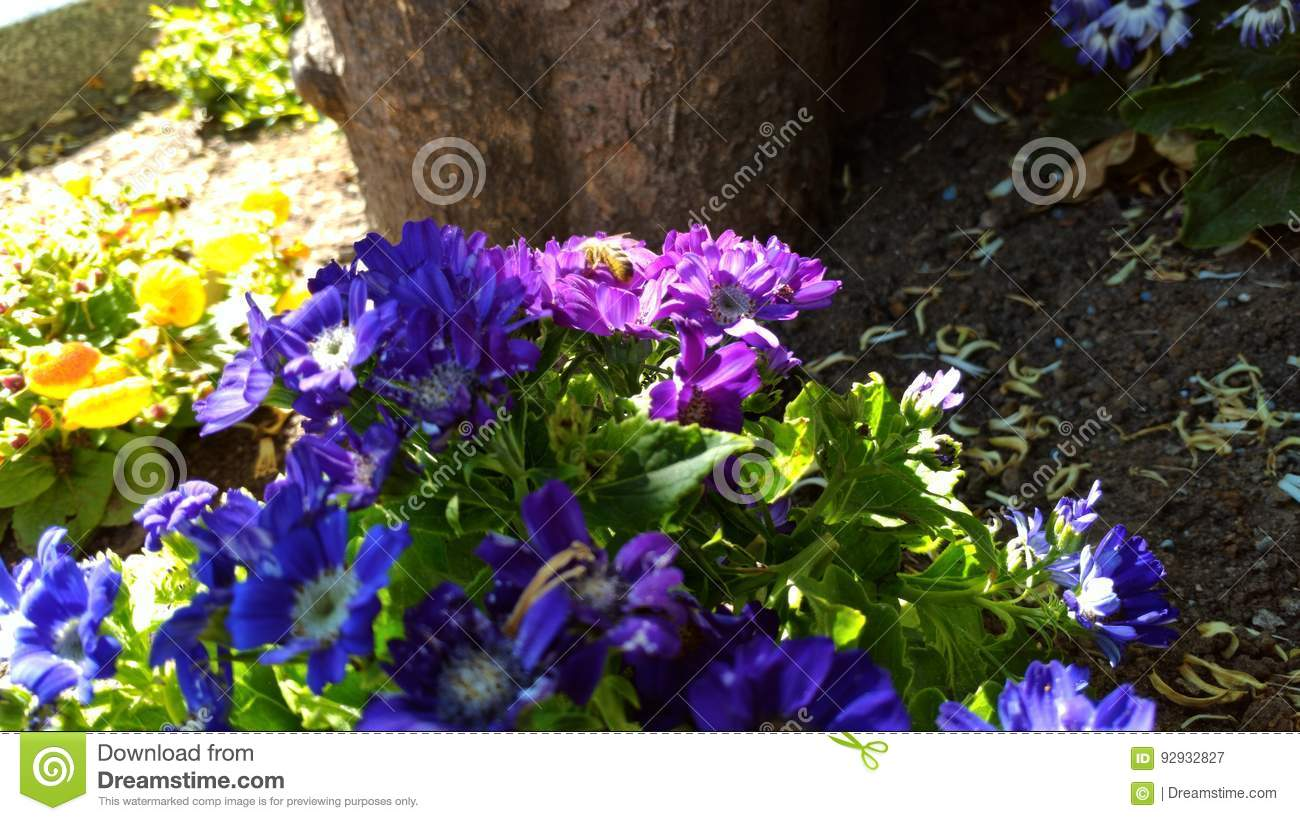 Bee Kind Stock Image Image Of Beautiful Flowers Minding 92932827