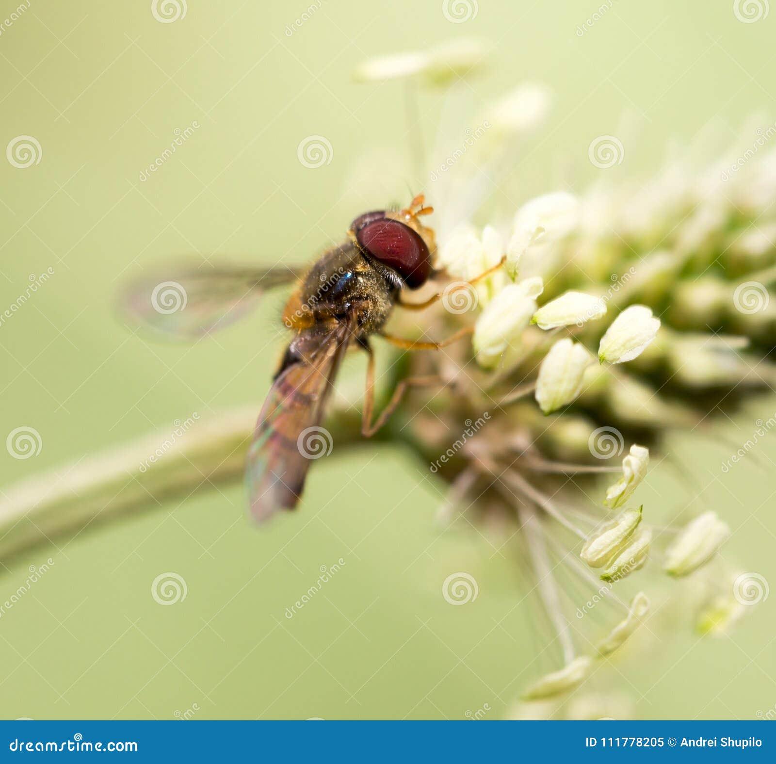 Bee in nature. macro