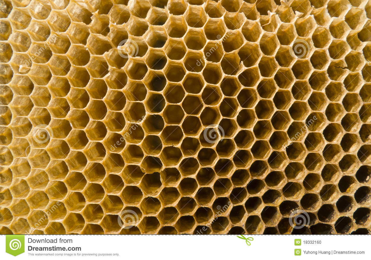 Discarded bee nest,regular hexagonal.