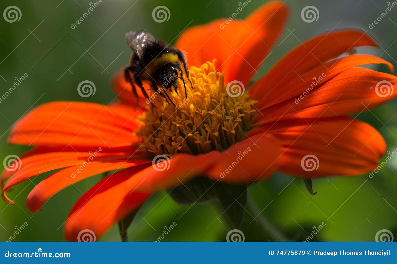 orange springs online dating Meet single women in orange springs fl online & chat in the forums dhu is a 100% free dating site to find single women in orange springs.