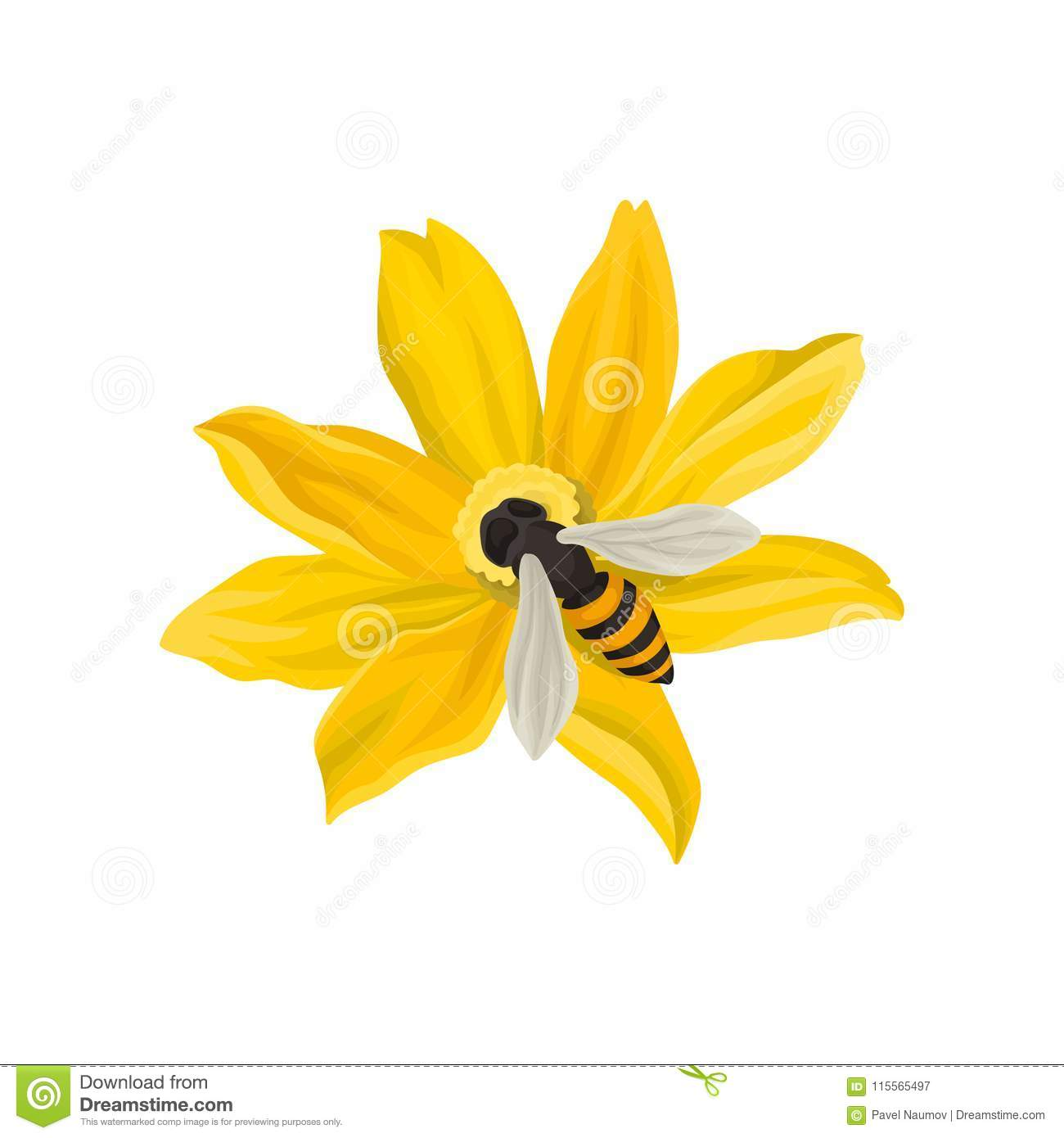 Bee Pollinating Beautiful Flower Flying Insect With Black And