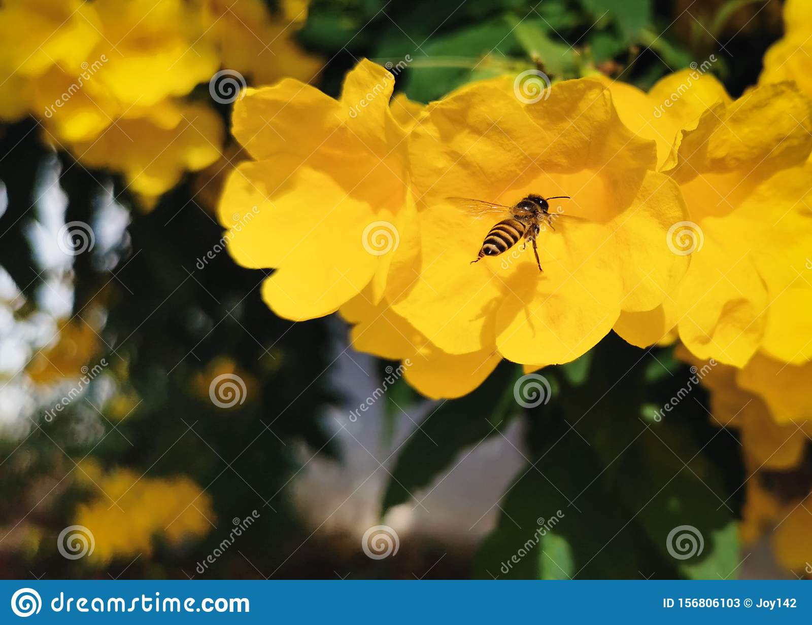 A bee is search for their food