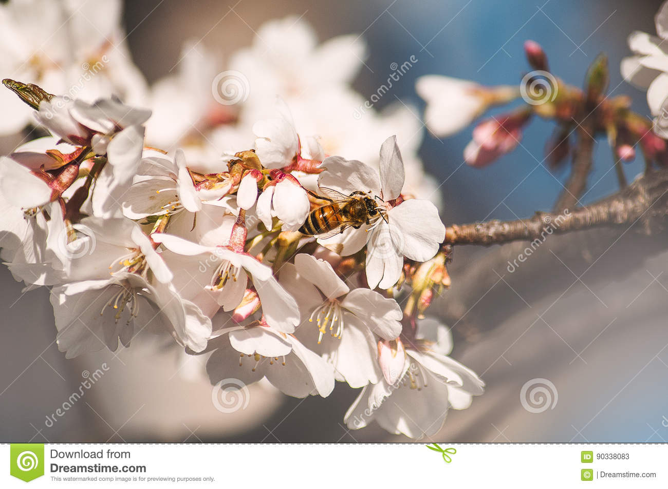 Bee smelling these blossoms