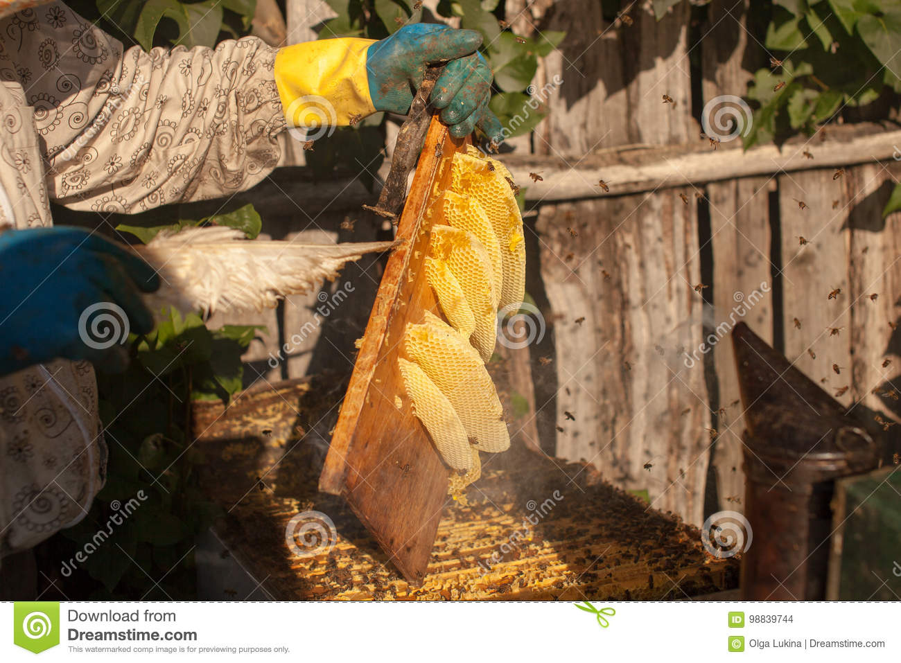 Bee smoker smoking in apiary copyspace seasonal honey bees beekeeping farming organic production producing concept.