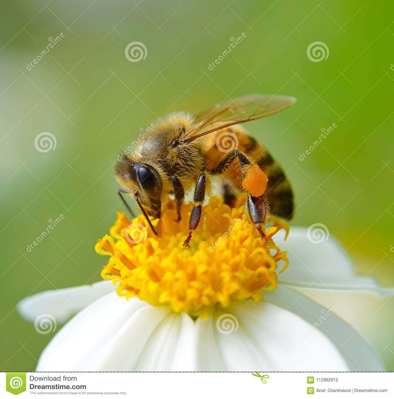 Bee to a flower.