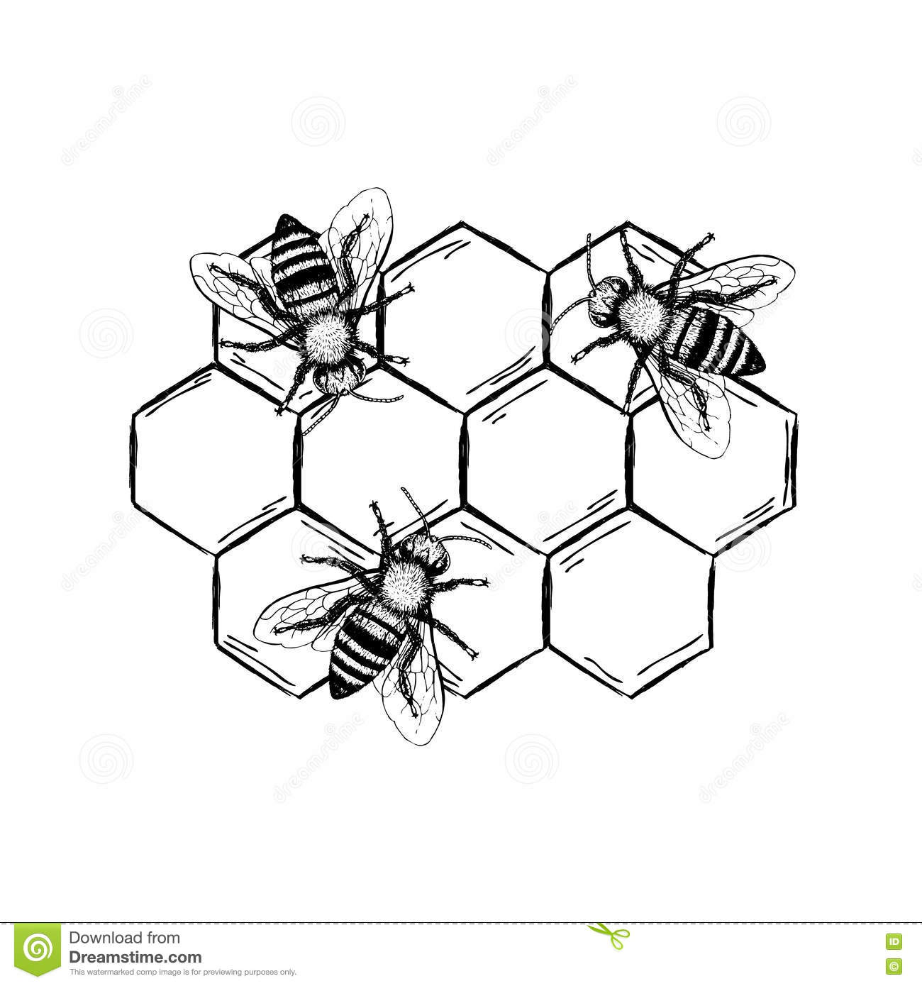 Bee vintage vector set stock vector illustration of design 77478608 bees with honeycombs set black and white graphic doodle design colored sketch vector illustration ccuart Images