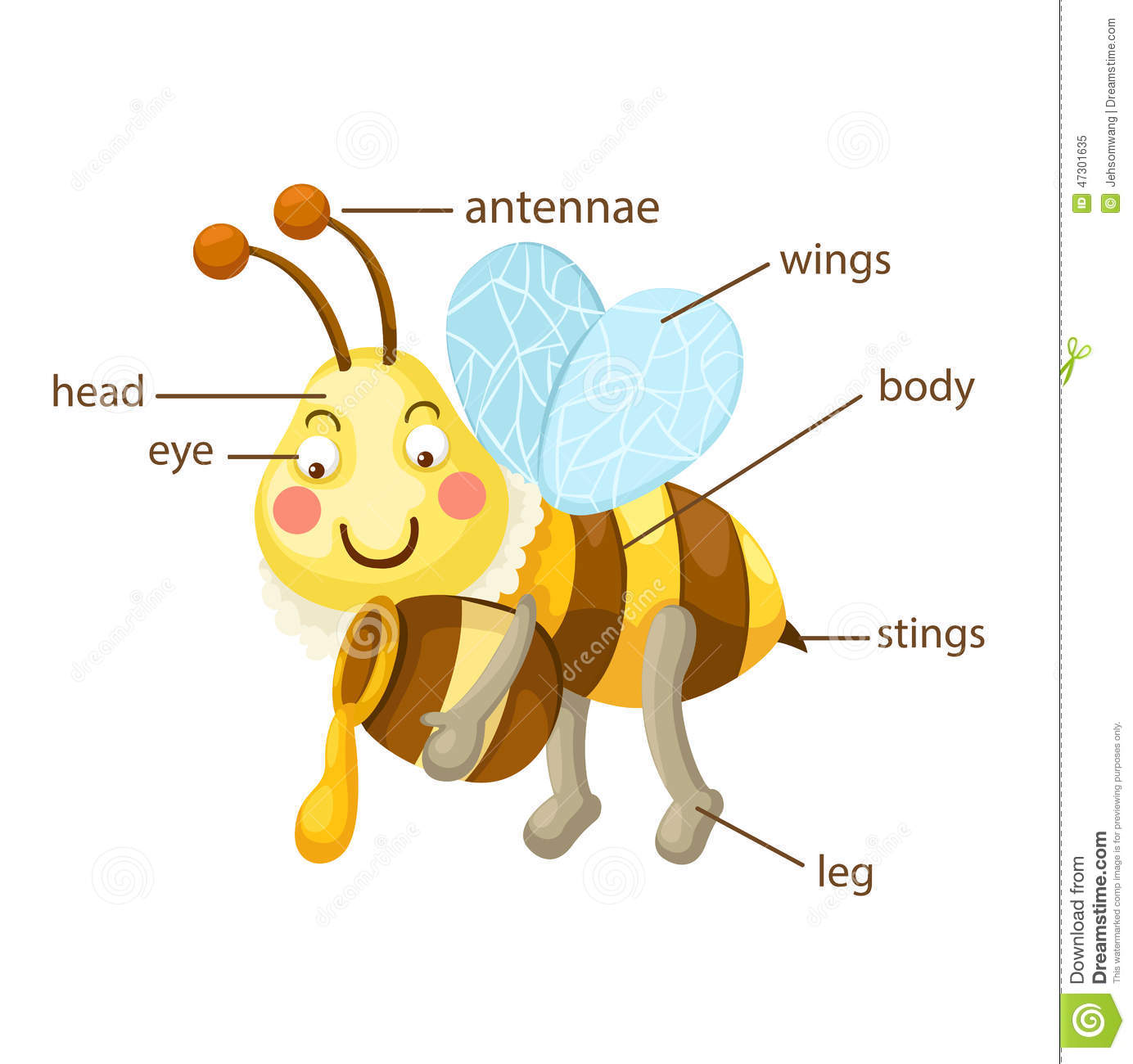 Bee Vocabulary Part Of Body Stock Vector - Illustration of antenna ...