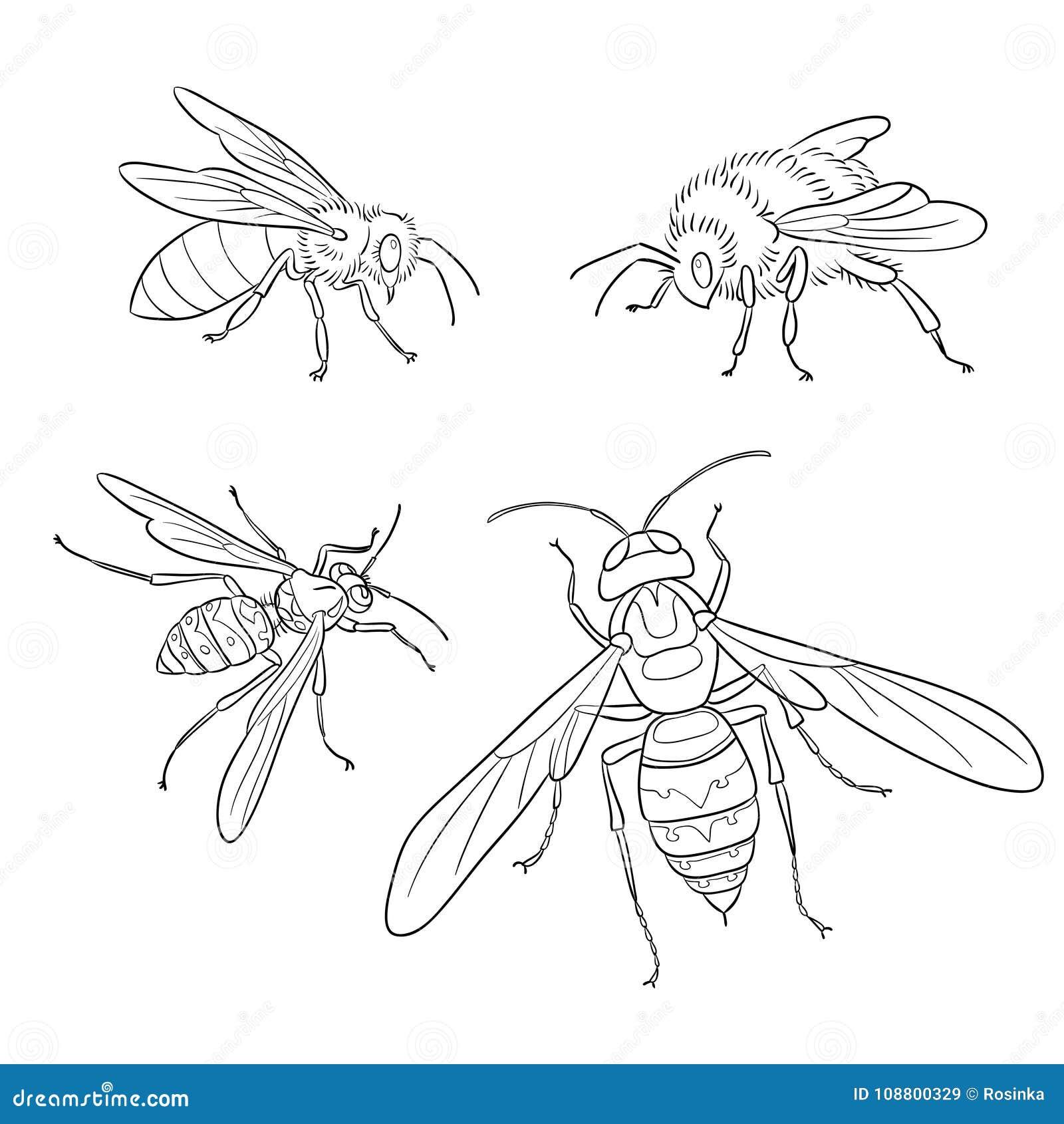 bee wasp bumblebee hornet in outlines vector illustration stock