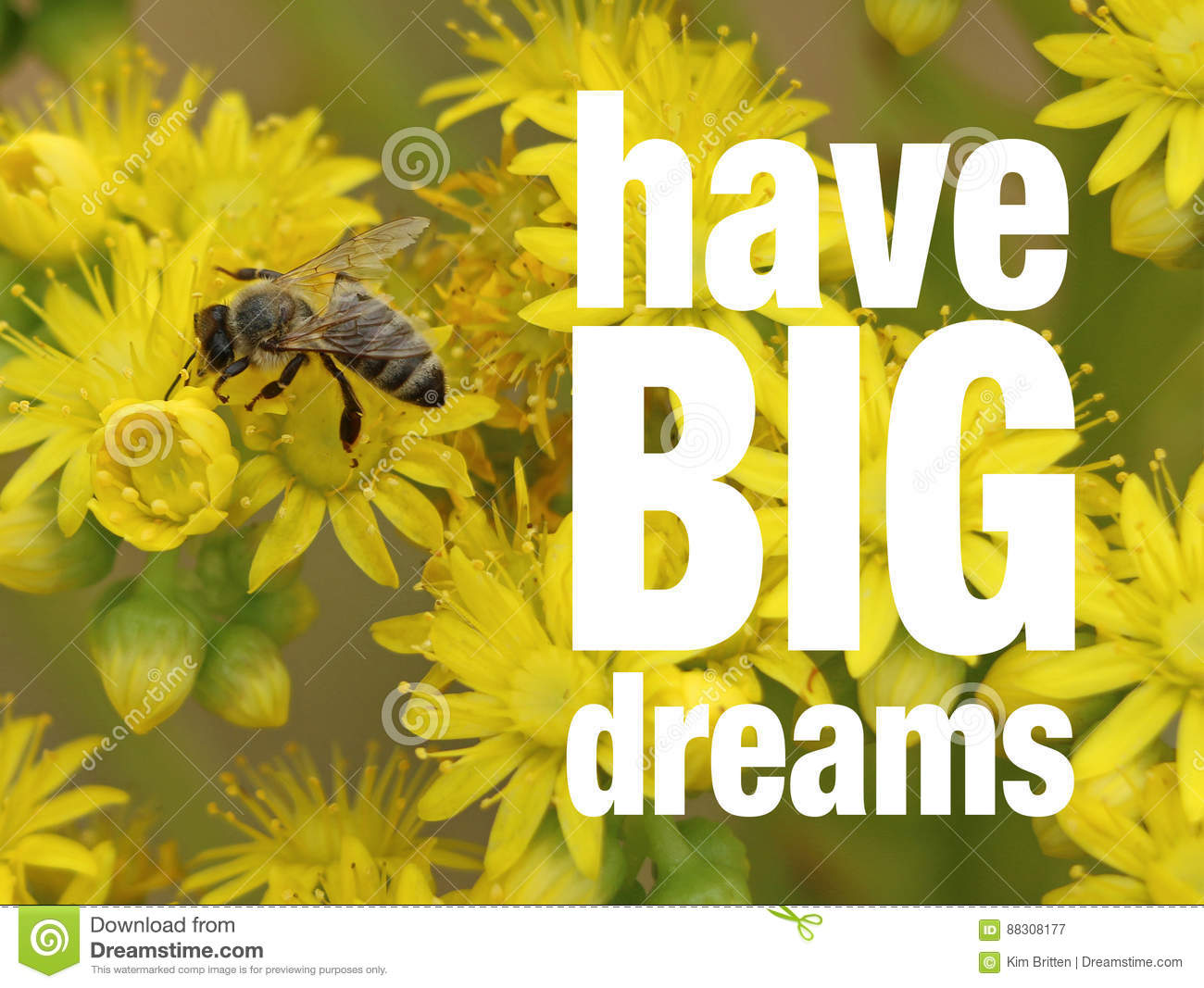 2 296 Flowers Quote Photos Free Royalty Free Stock Photos From Dreamstime