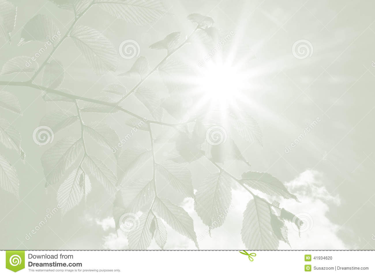 Beech Leaves And Rays Of Hope Sympathy Background Stock