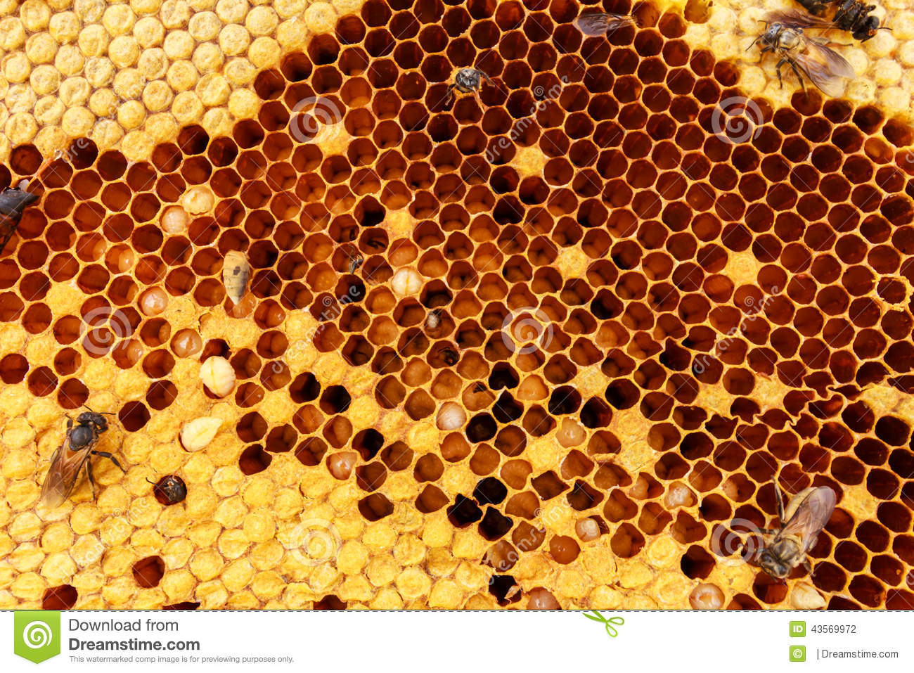 beehive texture stock photo image 43569972 beehive clip art of hexagon beehive clipart and images