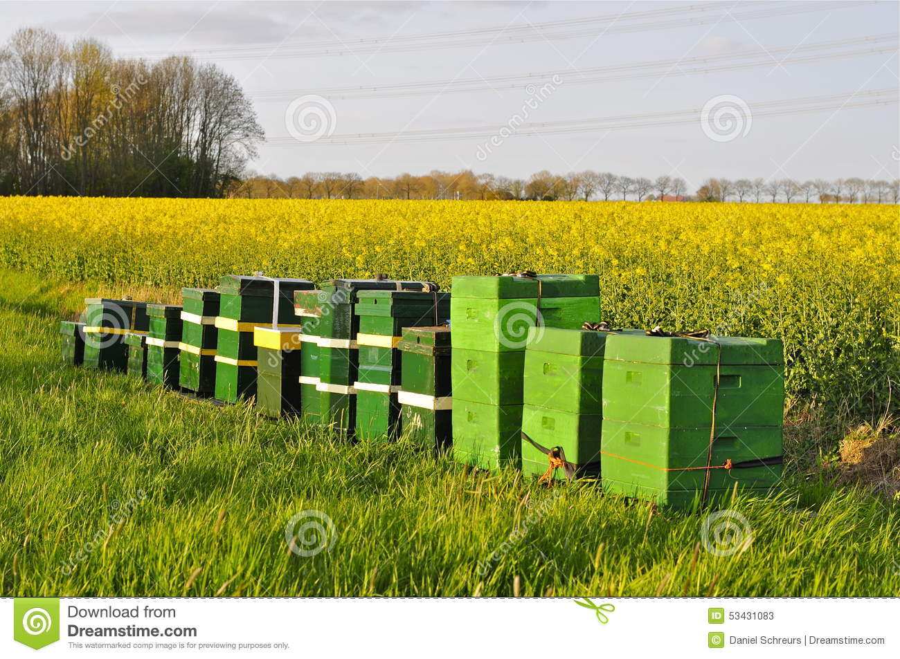 Beehives Next To A Field Of Rapeseed Stock Image - Image of erucic