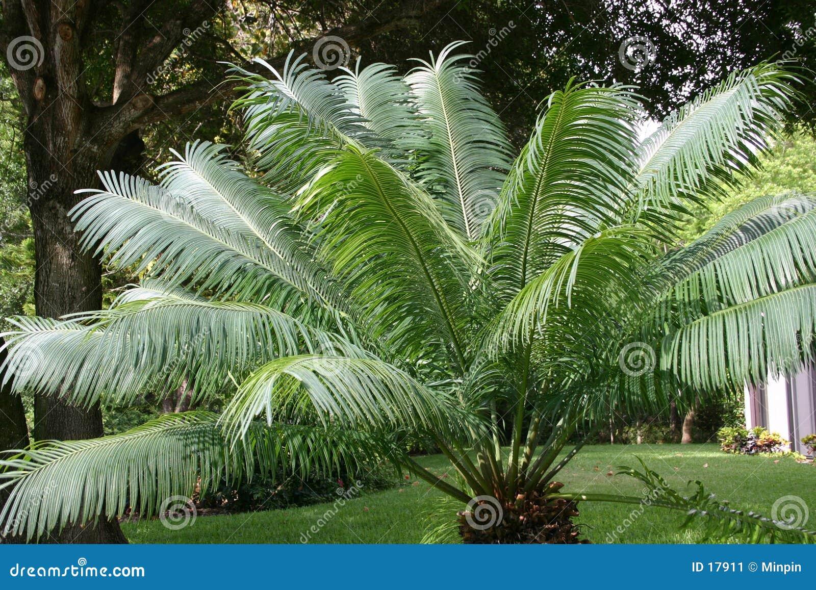 Beeinflussende Palmblätter