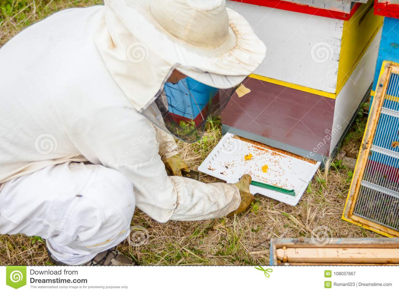 Beekeeper is checking collected colorful bee pollen on white plastic casserole