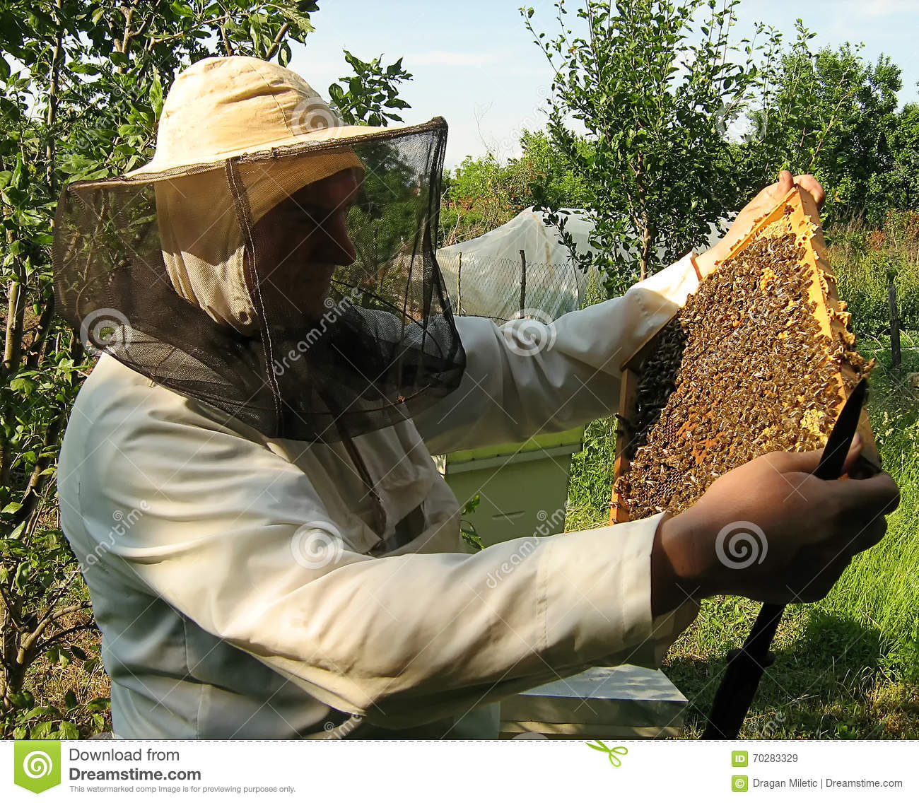 The beekeeper and framework with bees