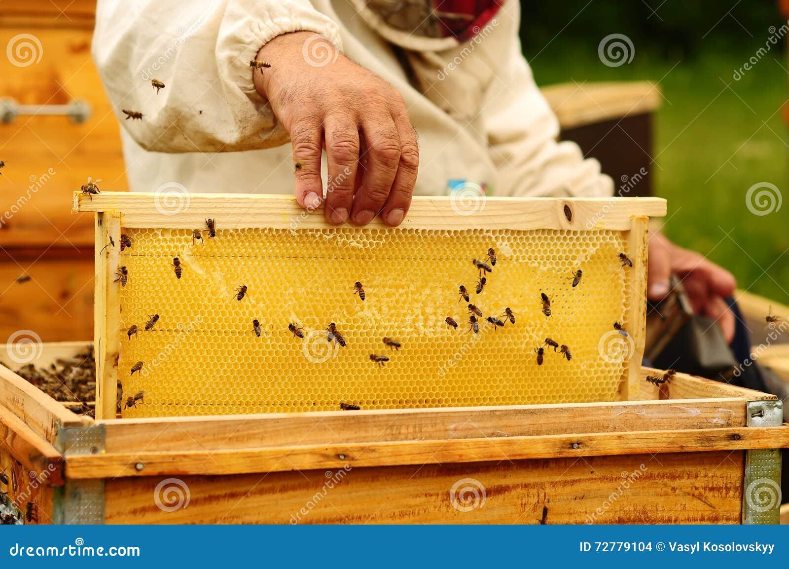 Beekeeper holding frame of honeycomb