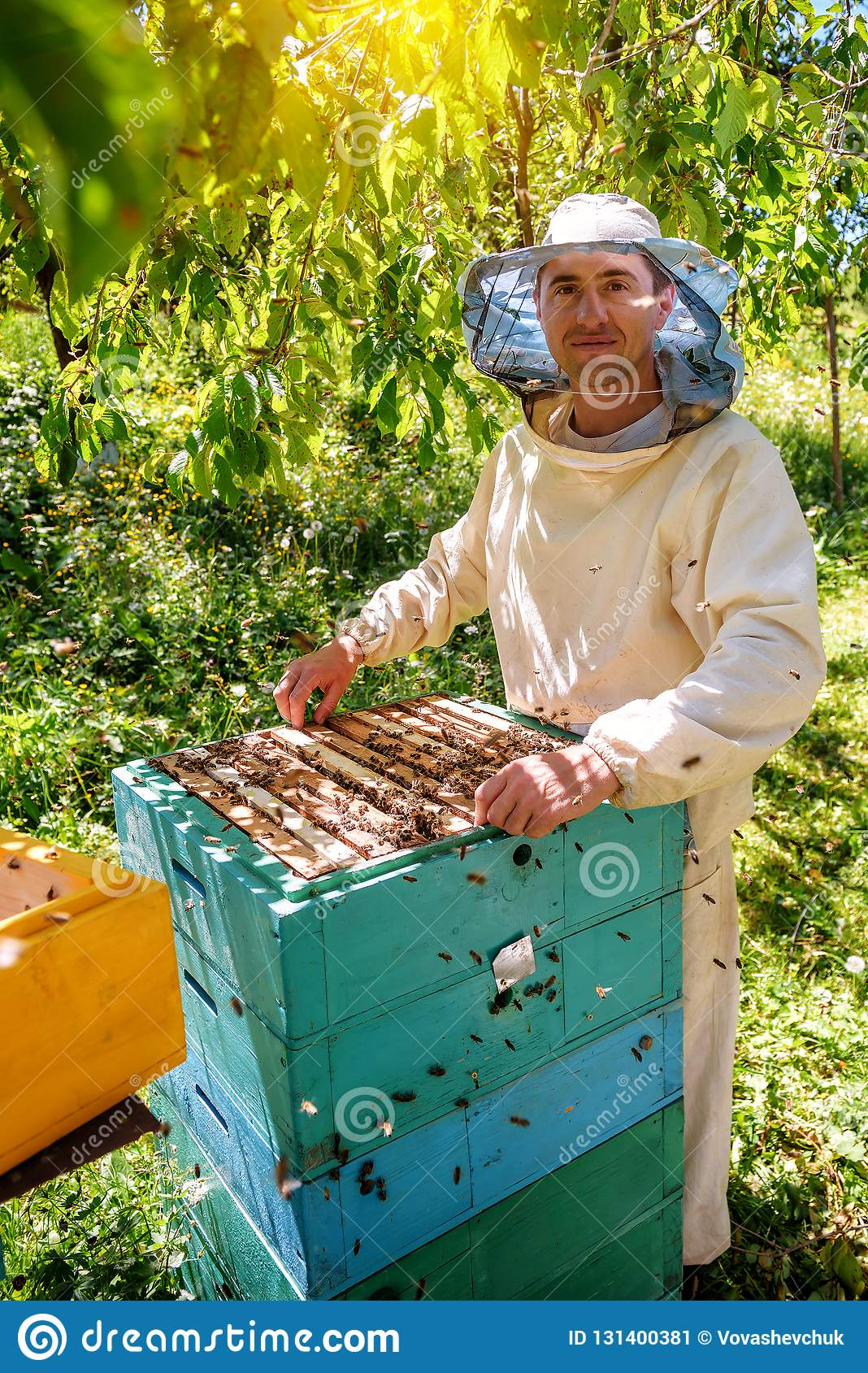 Beekeeper holding a honeycomb full of bees. Beekeeper inspecting honeycomb frame at apiary