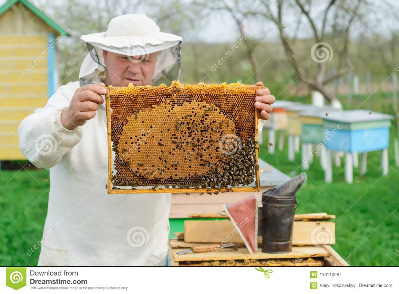 Beekeeper holding a honeycomb full of bees. Beekeeper in protective workwear inspecting honeycomb frame at apiary. Works