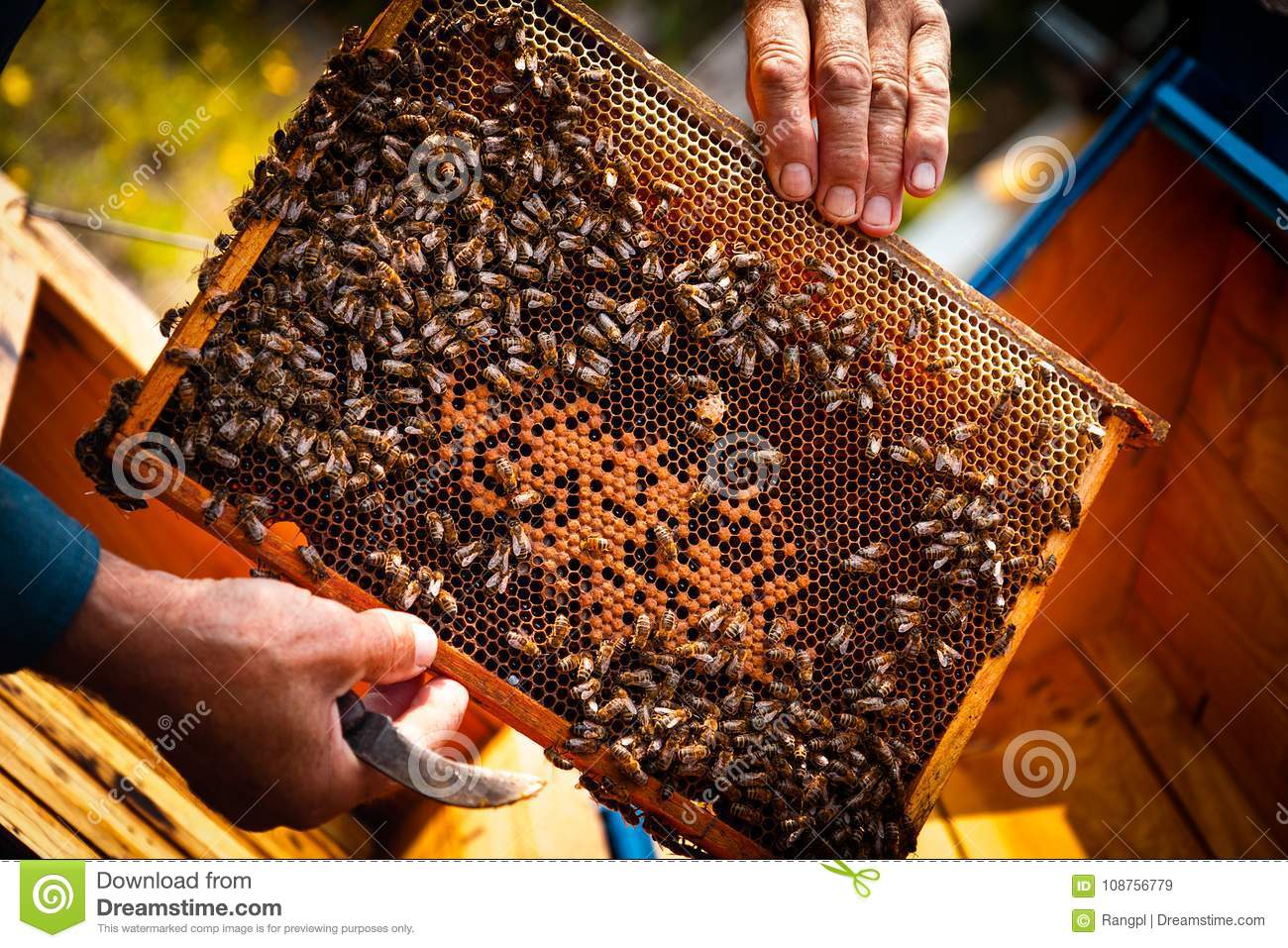 Beehive colony frame stock image. Image of hive, beekeeping - 108756779