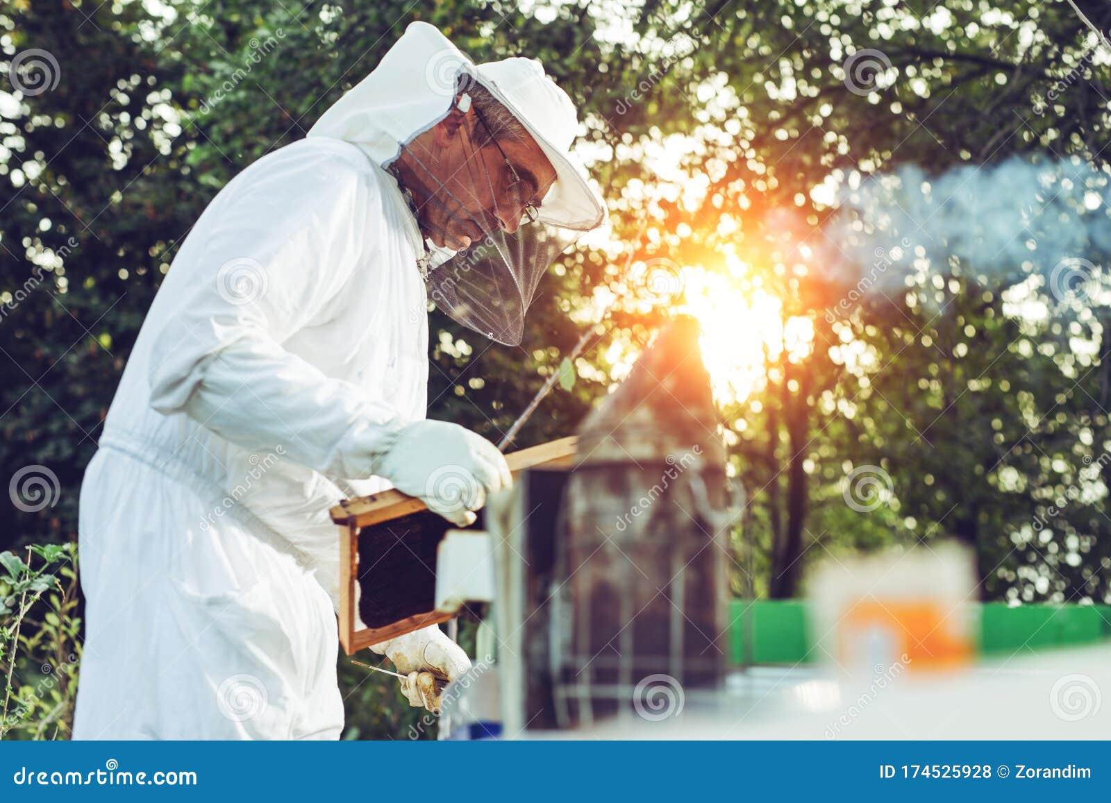 Beekeeper Smoker Smokes White Smoke. Beekeeper Work At The ...