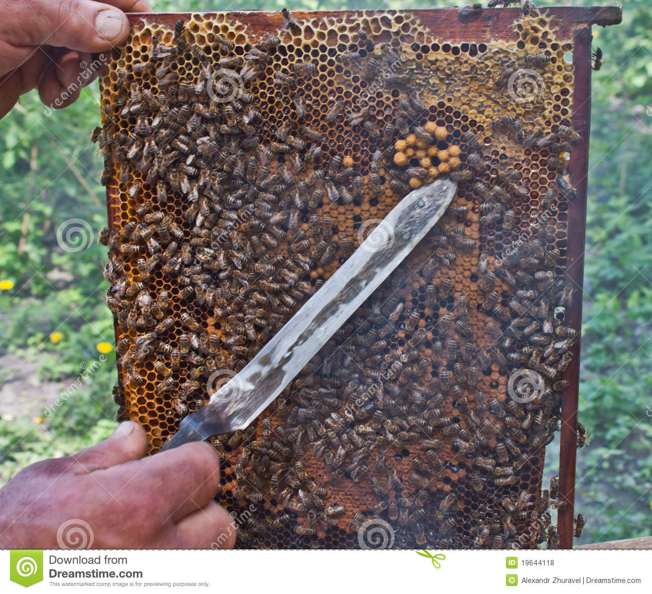 Business plan for a beekeeper
