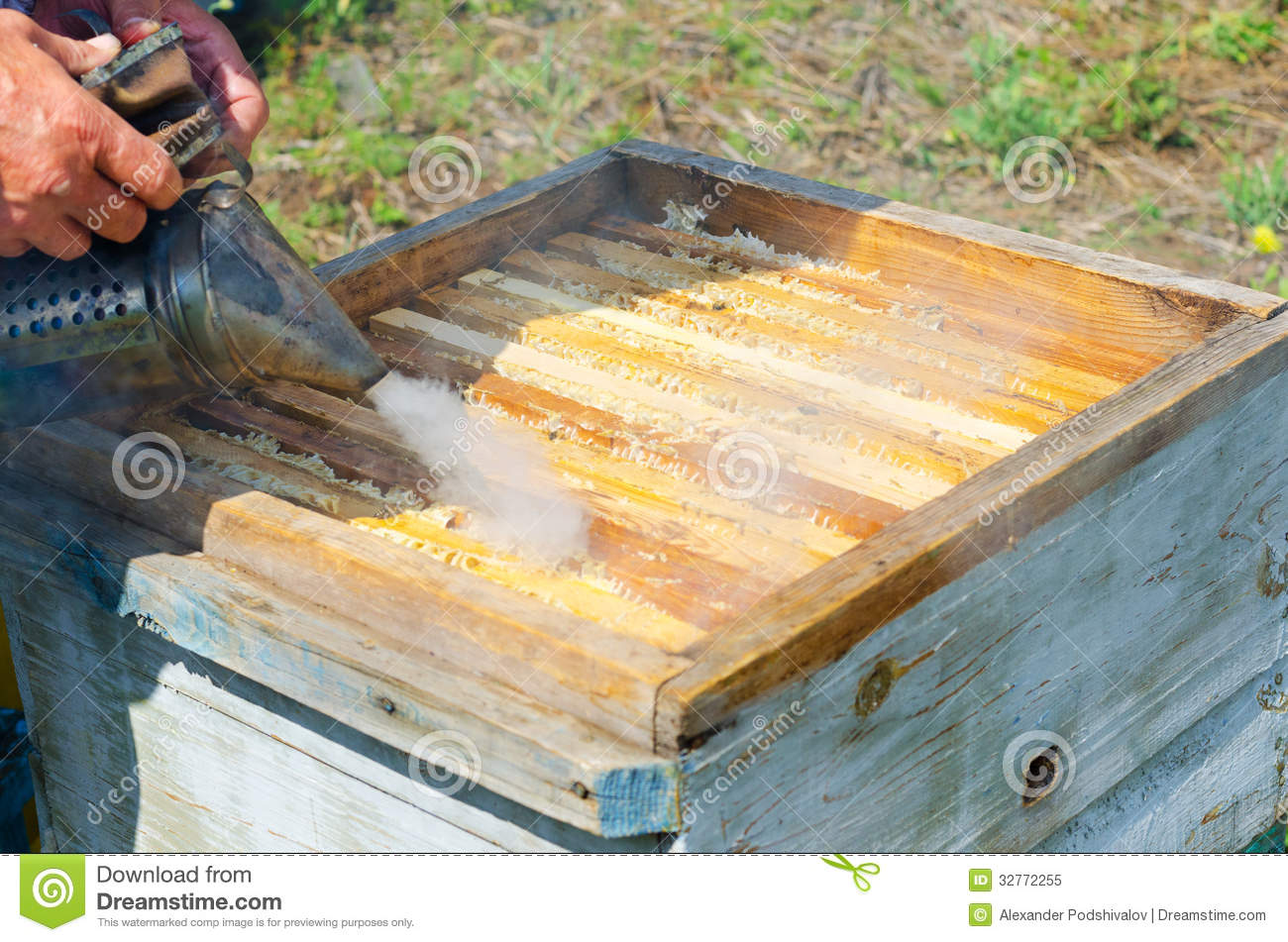 beekeeper work smokes beehive takes out honeycomb frames 32772255