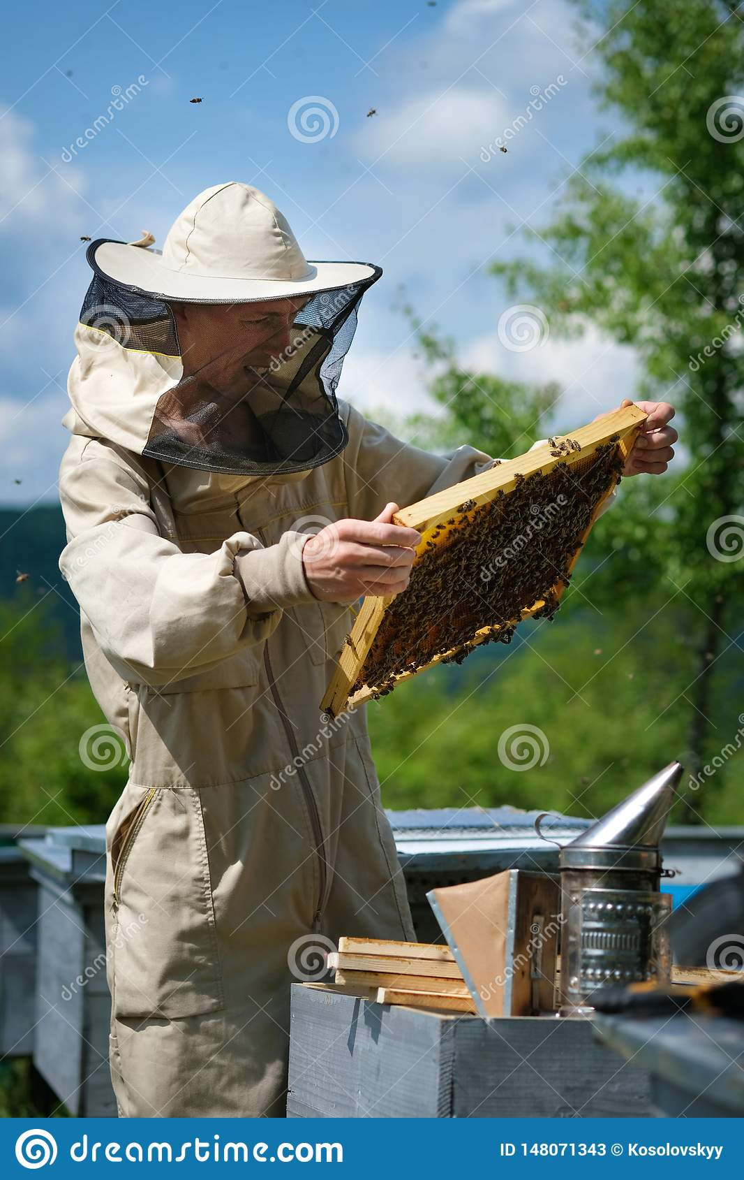 Beekeeper working collect honey. Apiary. Beekeeping concept.