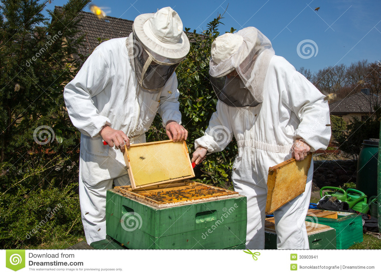 2 beekeepers поддерживая крапивницу пчелы