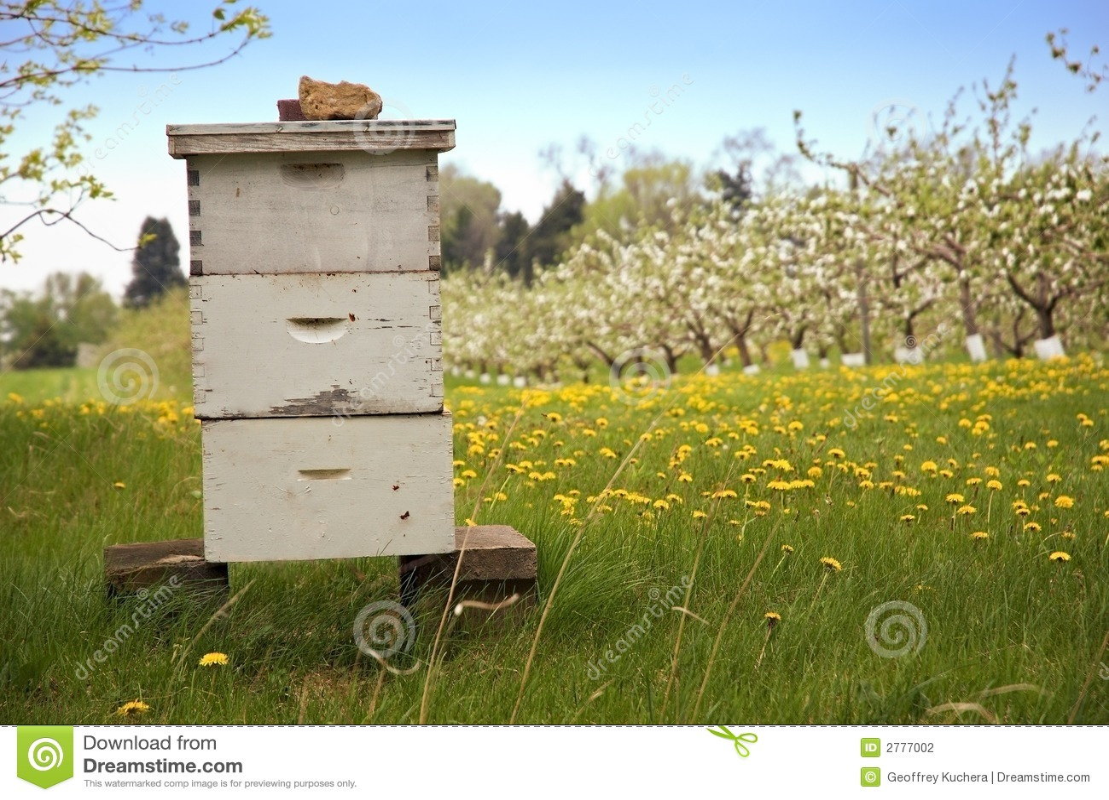 Beekeeping with Apple Trees