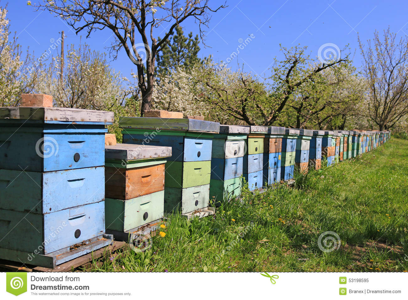 Apiary Yard With Bee Hives In The Autumn. Stock Image