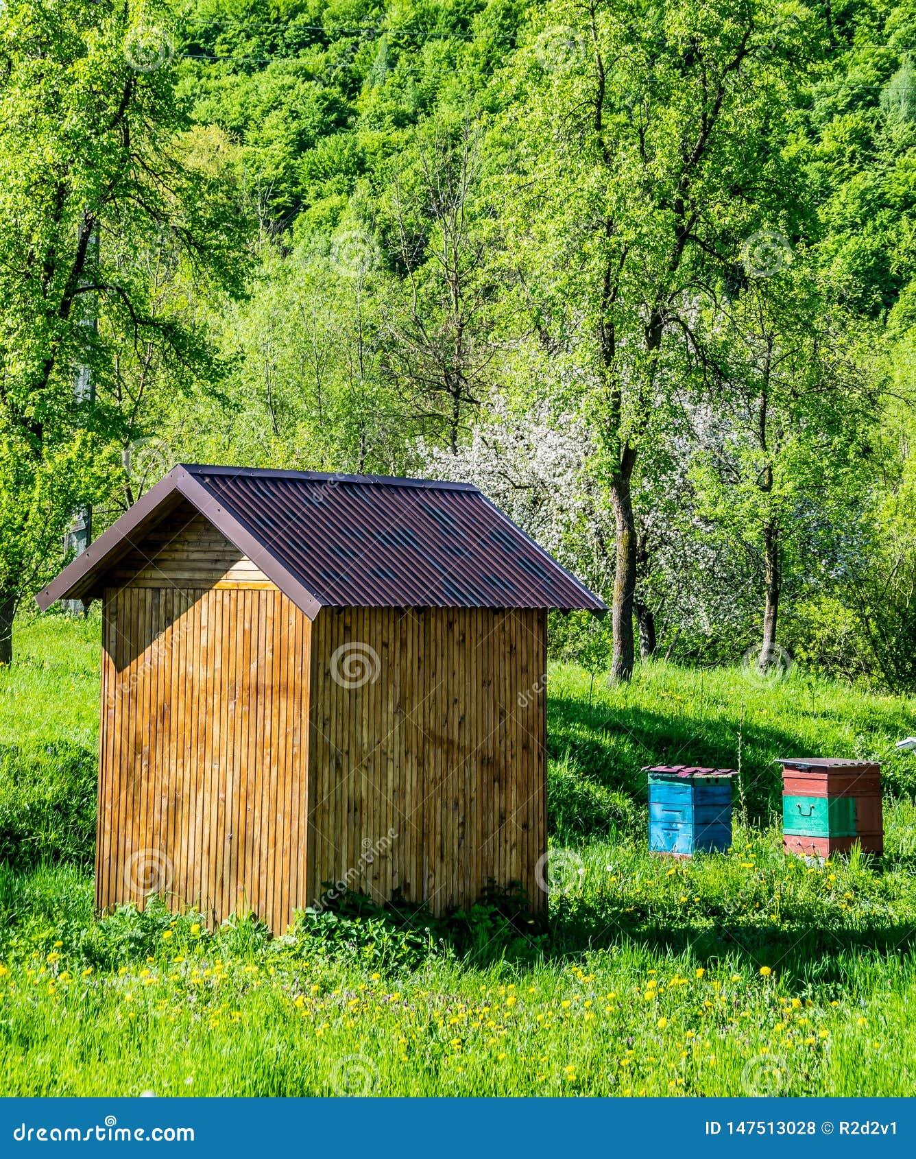 Beekeeping in the garden