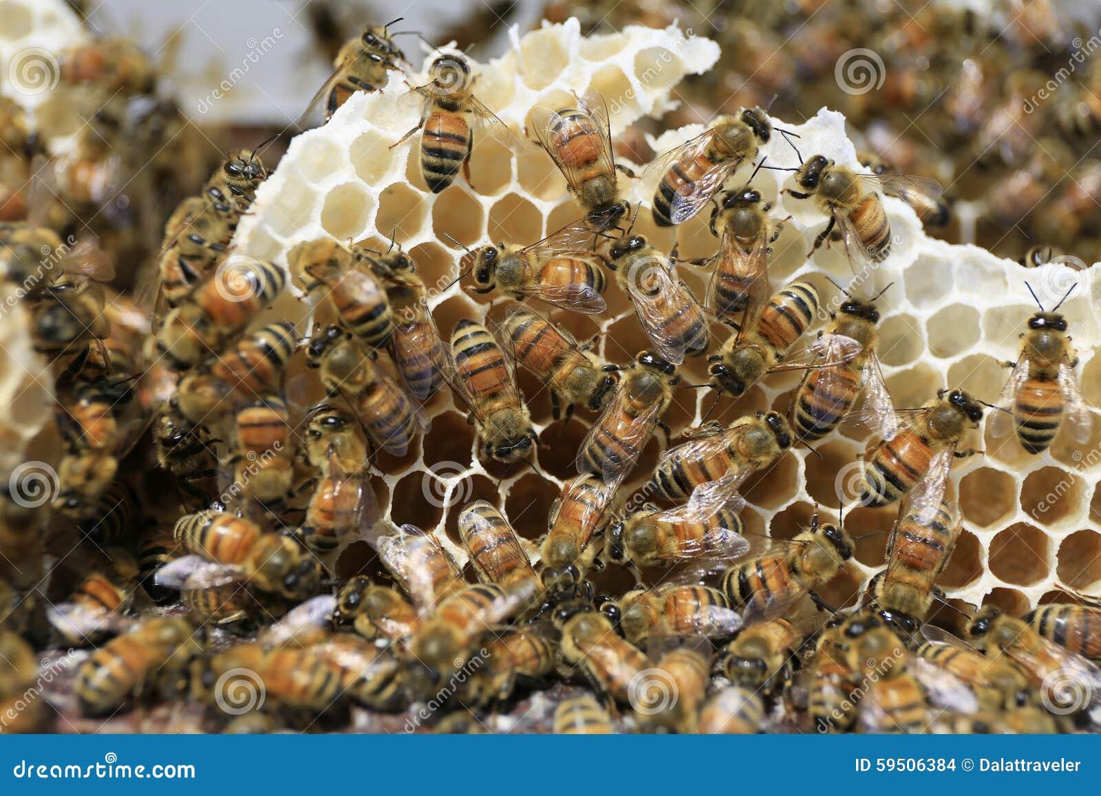Beekeeping przy Wietnam