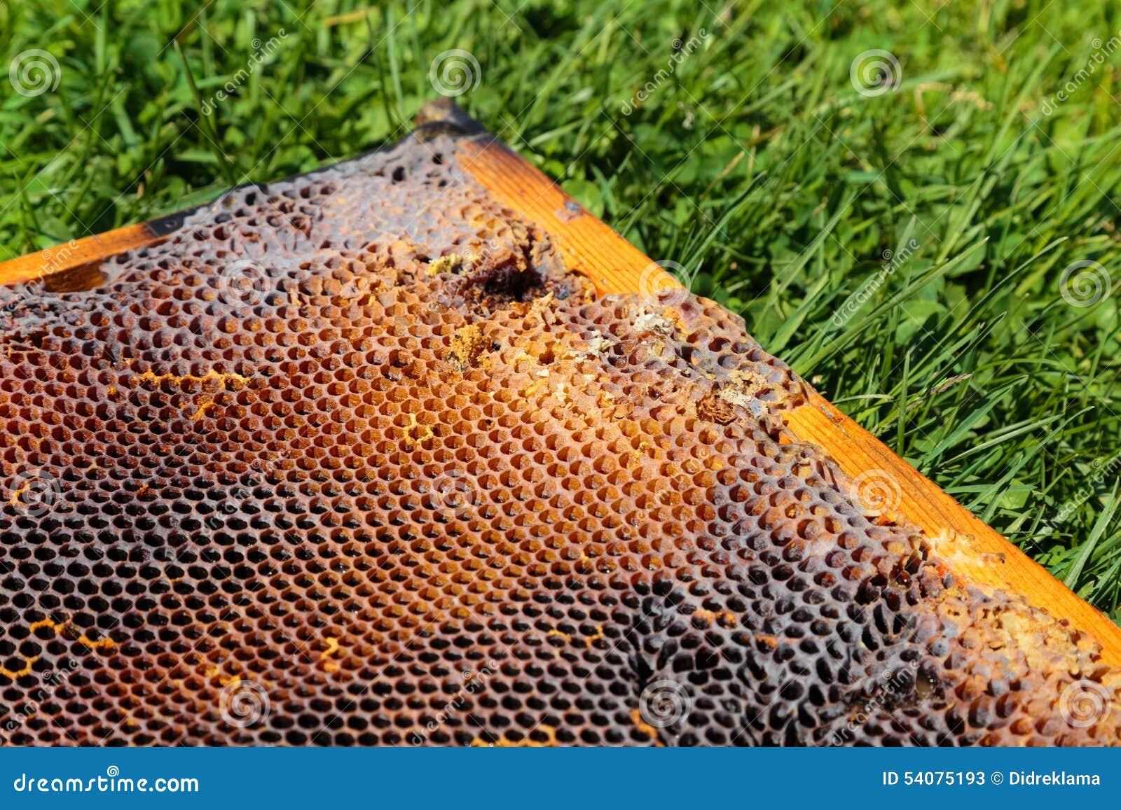 Beeld in close-up van een honingraat op een gras