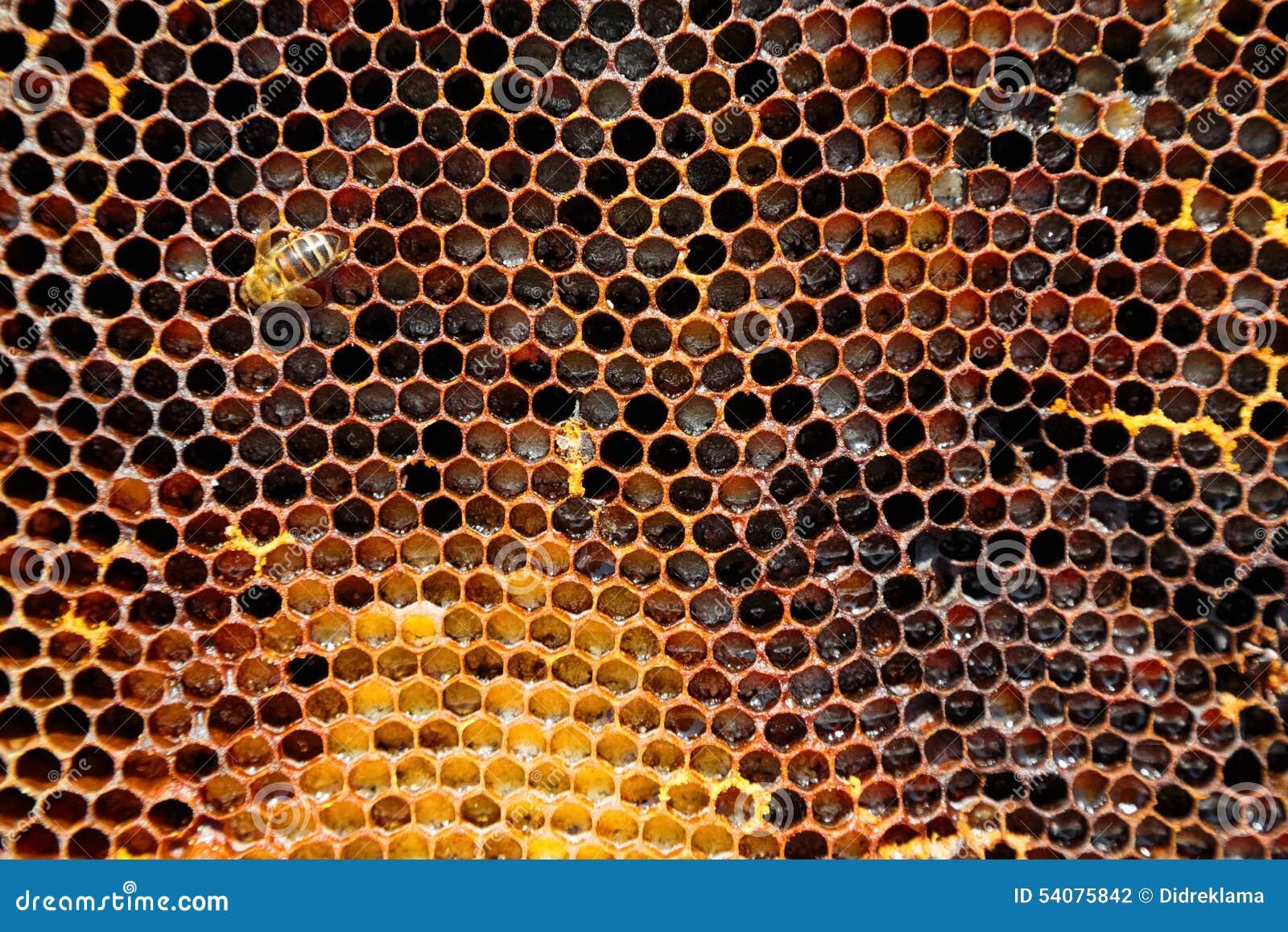 Beeld van een honingraat in close-up
