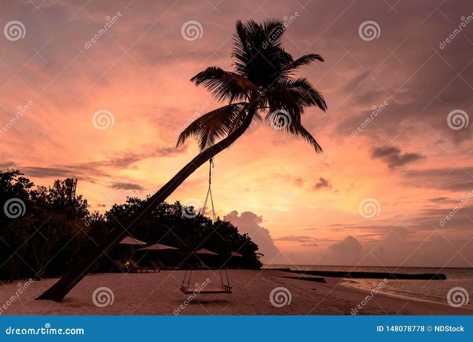 Beeld van een palm en een schommeling tijdens zonsondergang