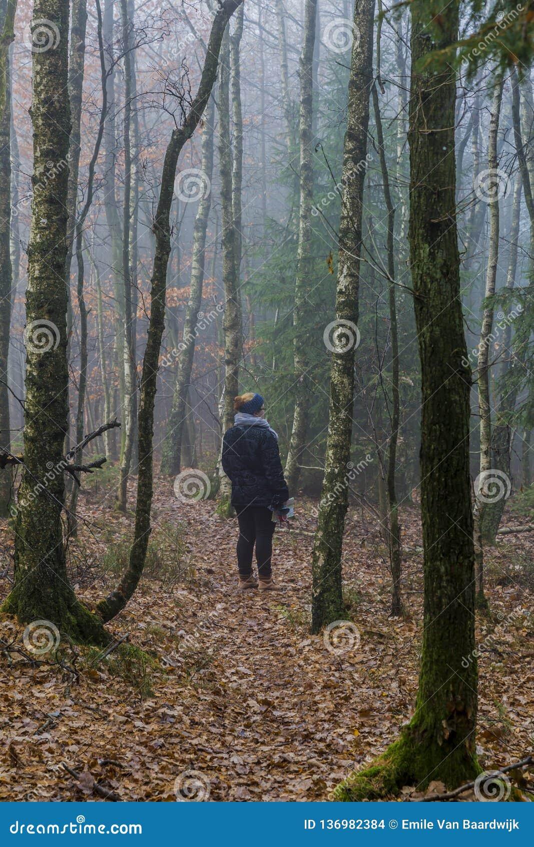 Beeld van een vrouw die lettend op de weg onder lange pijnboombomen in het bos bevinden zich