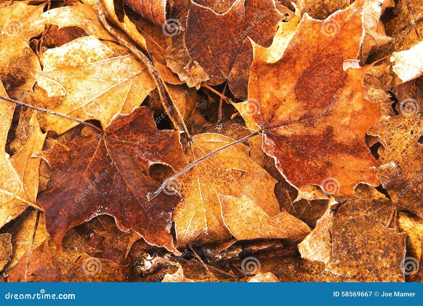 Beeld van Gevallen Esdoornbladeren