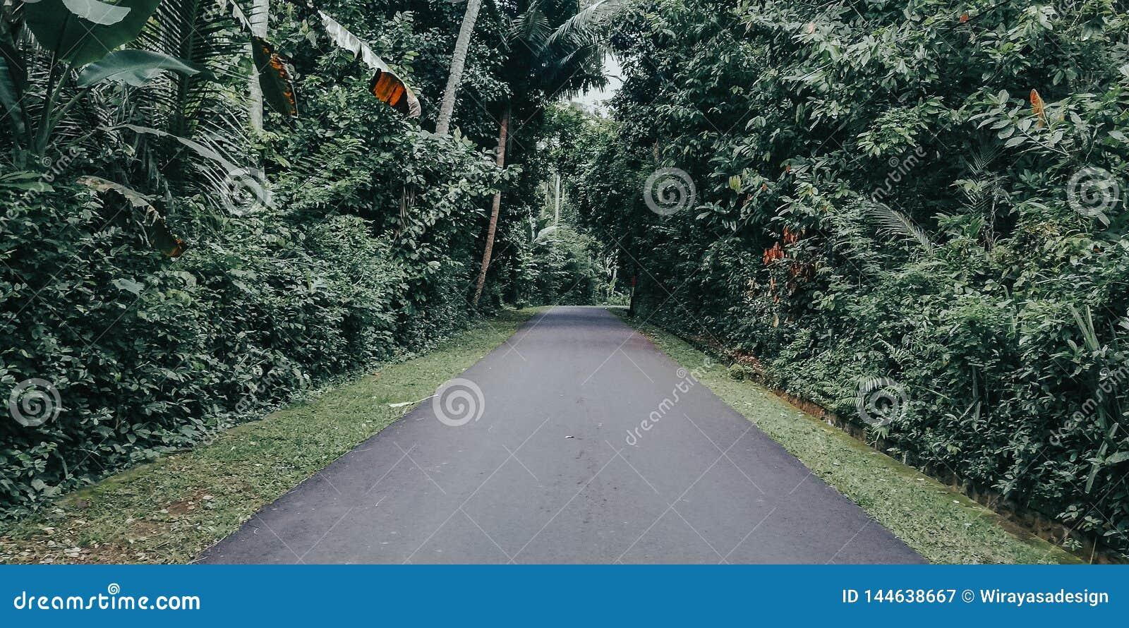 Beelden van landelijke aard, met bossen op het recht en weggegaan, beelden van wegen in het dorp, met groene aard