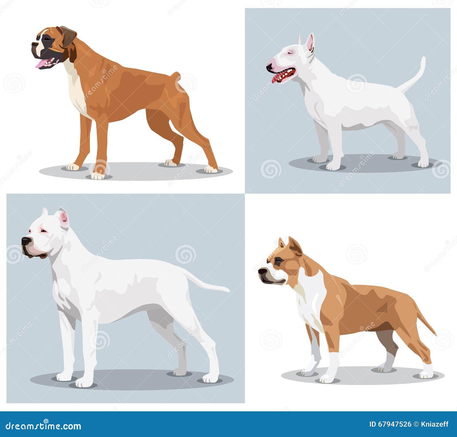 Beeldreeks honden