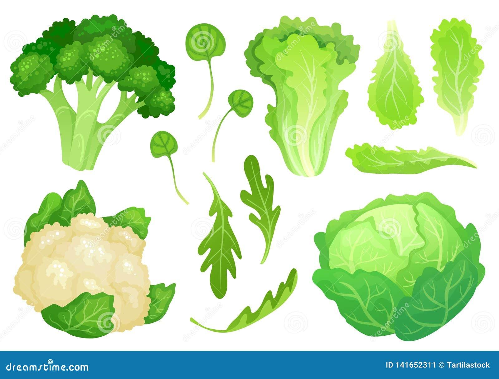Beeldverhaalkolen Verse slabladeren, vegetarische dieetsalade en gezonde tuin groene kool Bloemkool hoofdvector