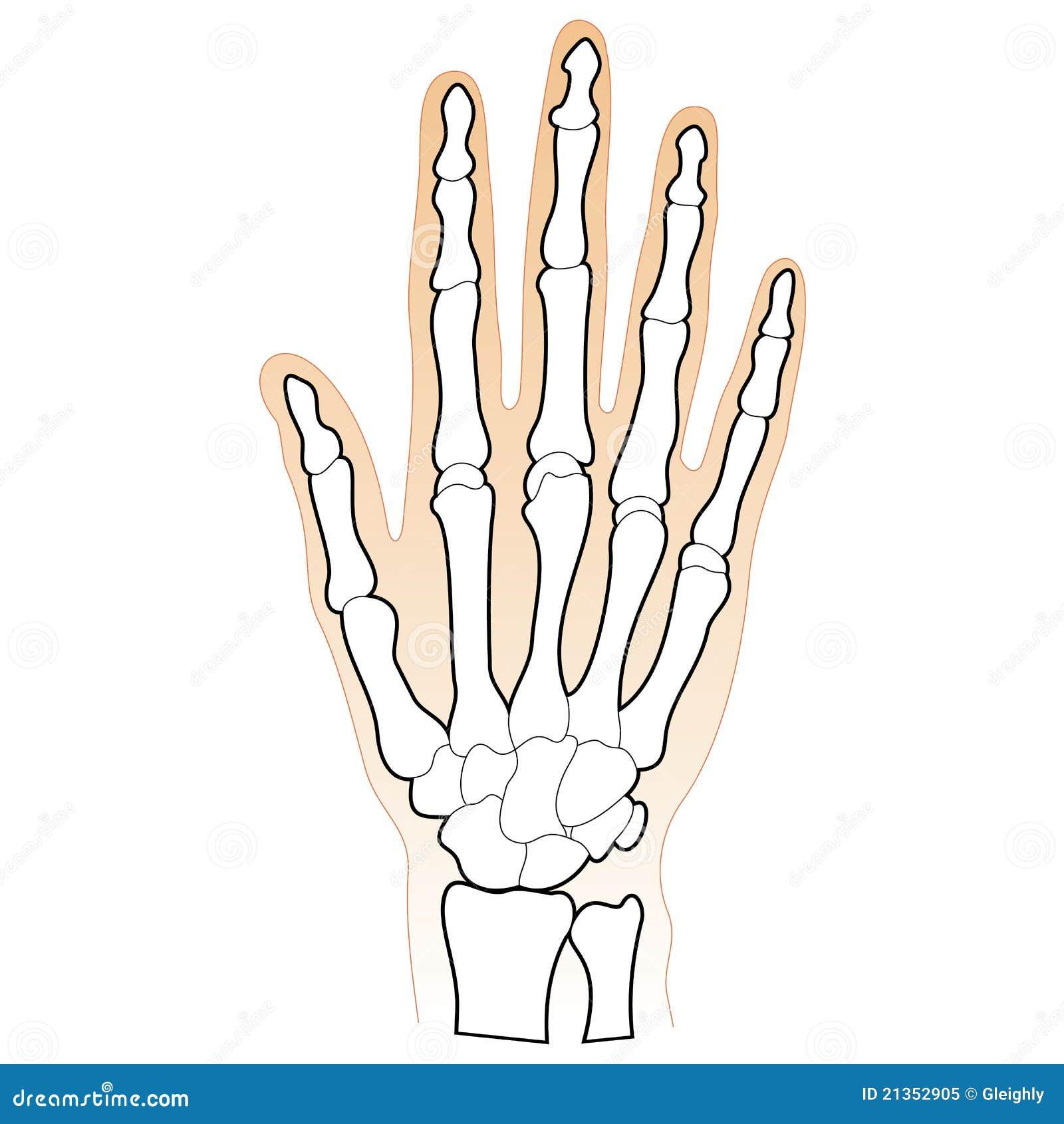 Beenderen hand