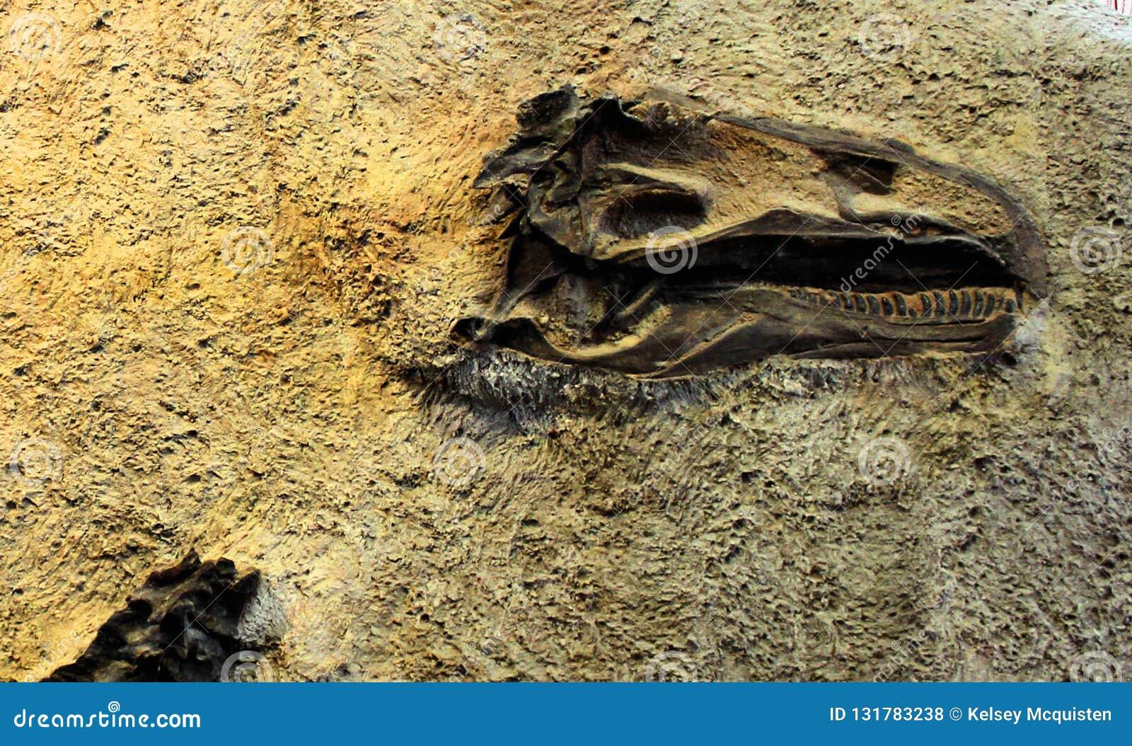 Beenderen van de muurdino van het dinosaurus de Nationale Monument