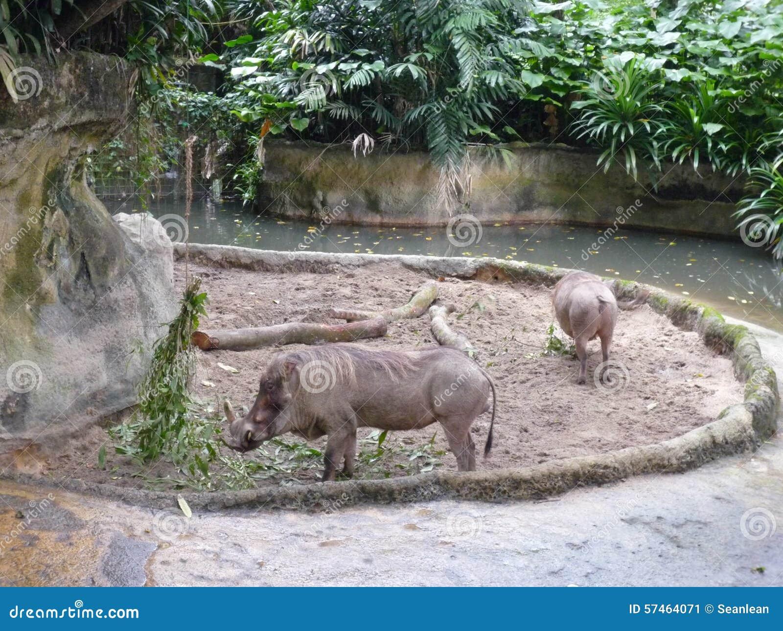 flirten dierentuin