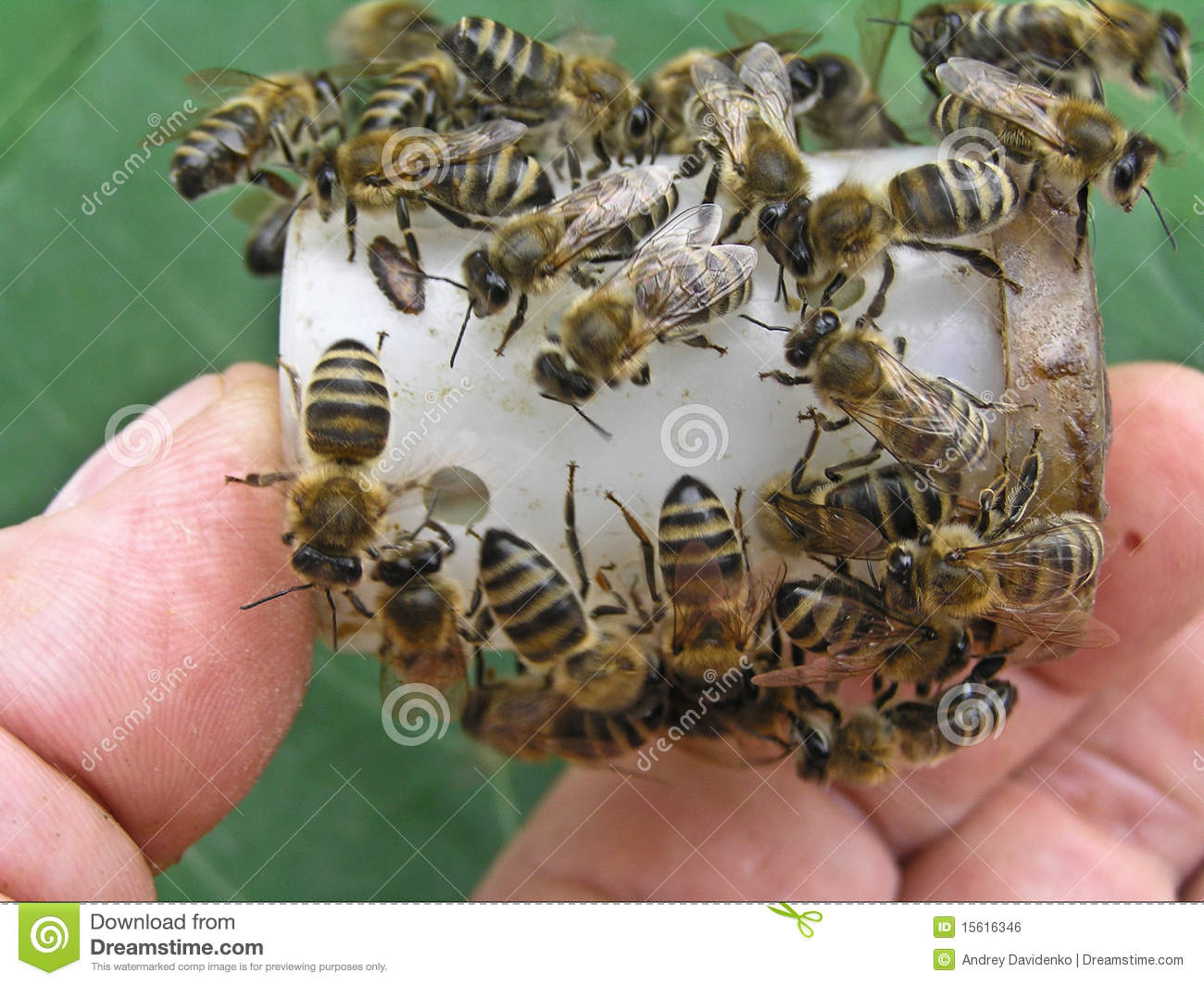 Bees on the box with the head of the family