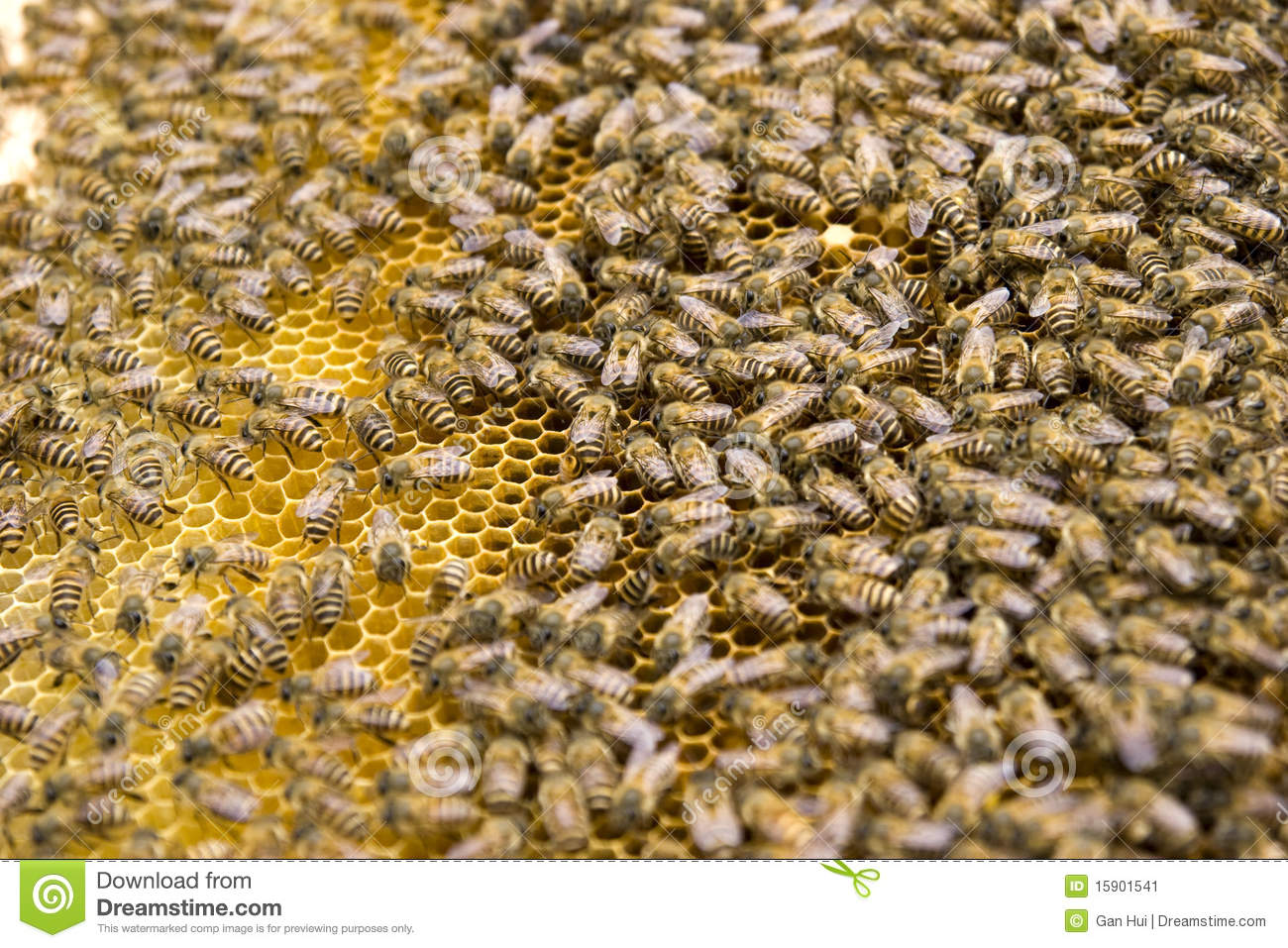 content industry agriculture seafood animals crops animal production bees
