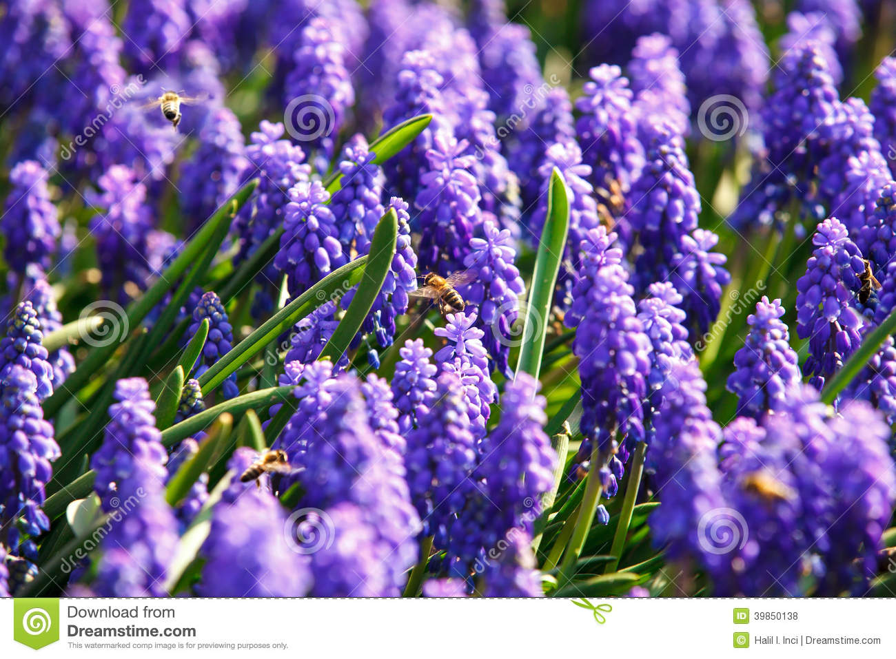 Bees On Spring Flowers Stock Photo Image Of Abstract 39850138